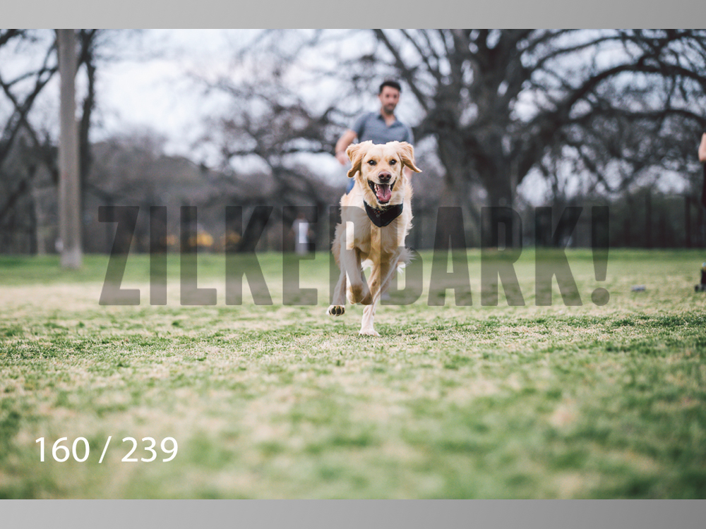 2.20 Dogs-160.jpg