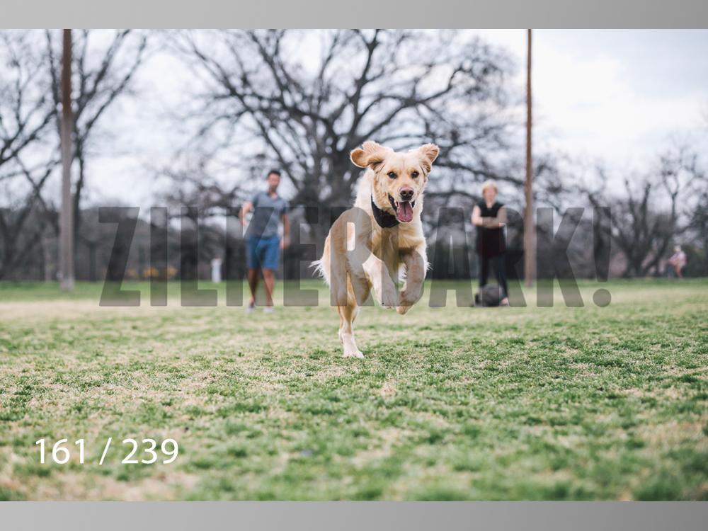 2.20 Dogs-161.jpg