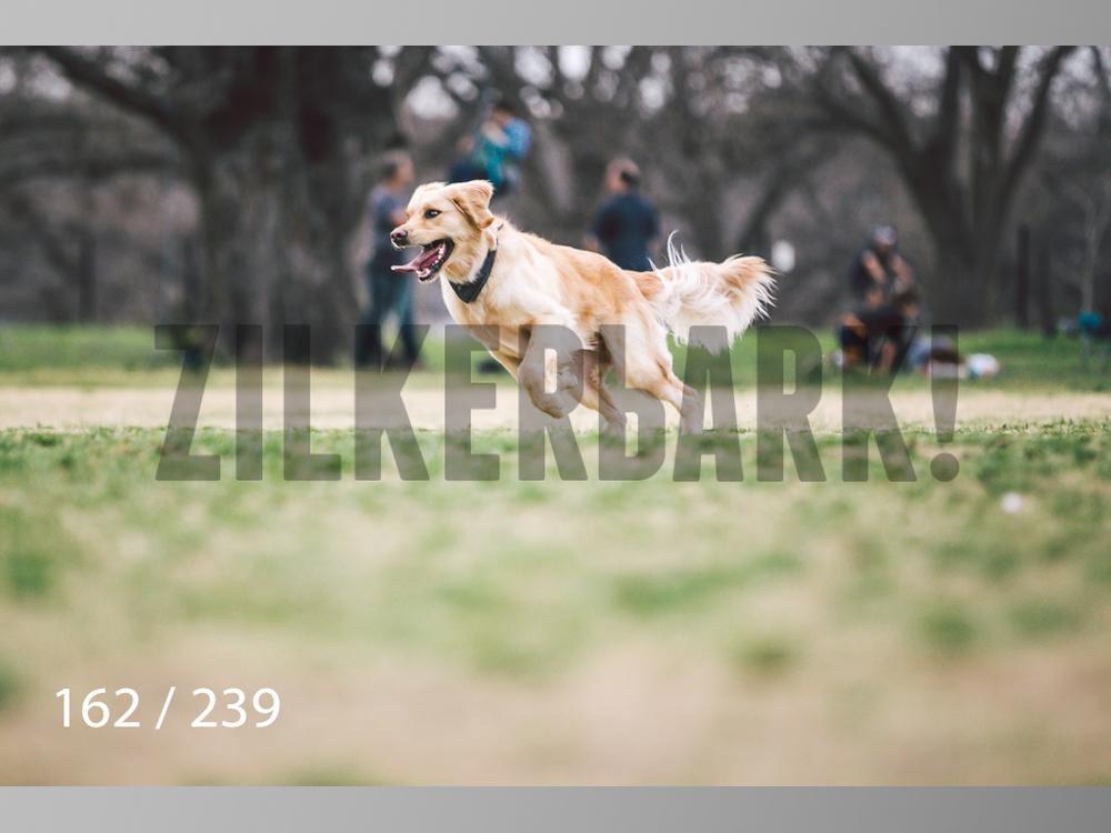 2.20 Dogs-162.jpg