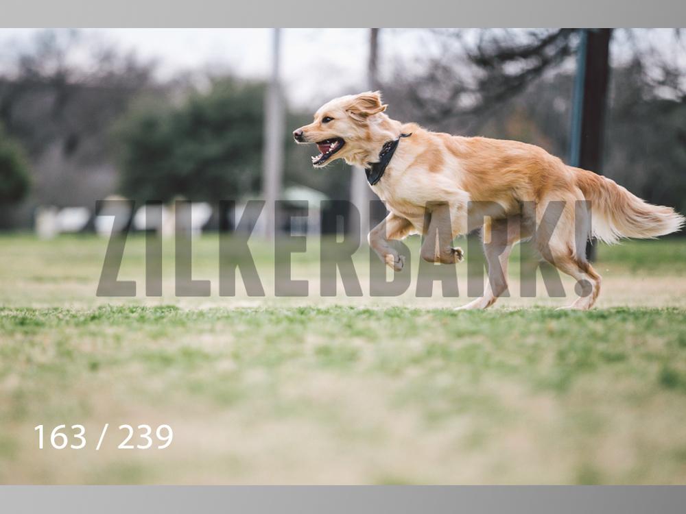 2.20 Dogs-163.jpg