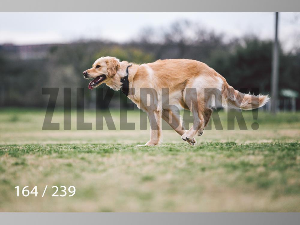 2.20 Dogs-164.jpg