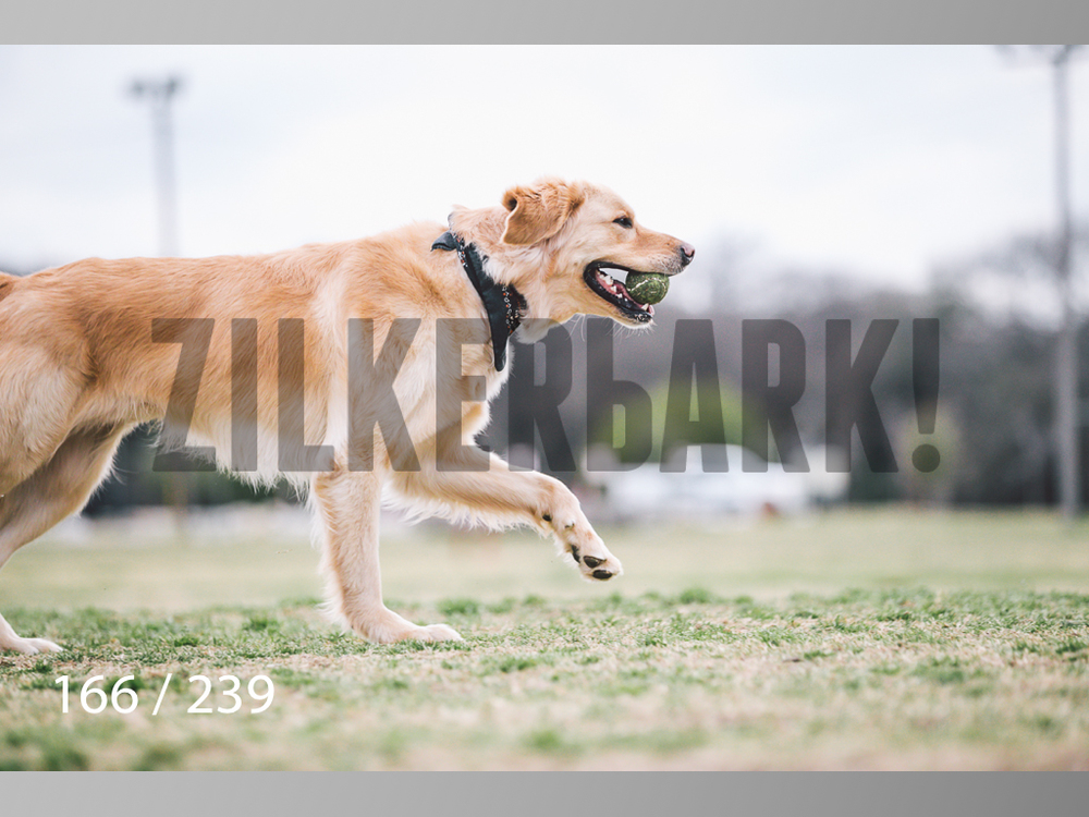 2.20 Dogs-166.jpg