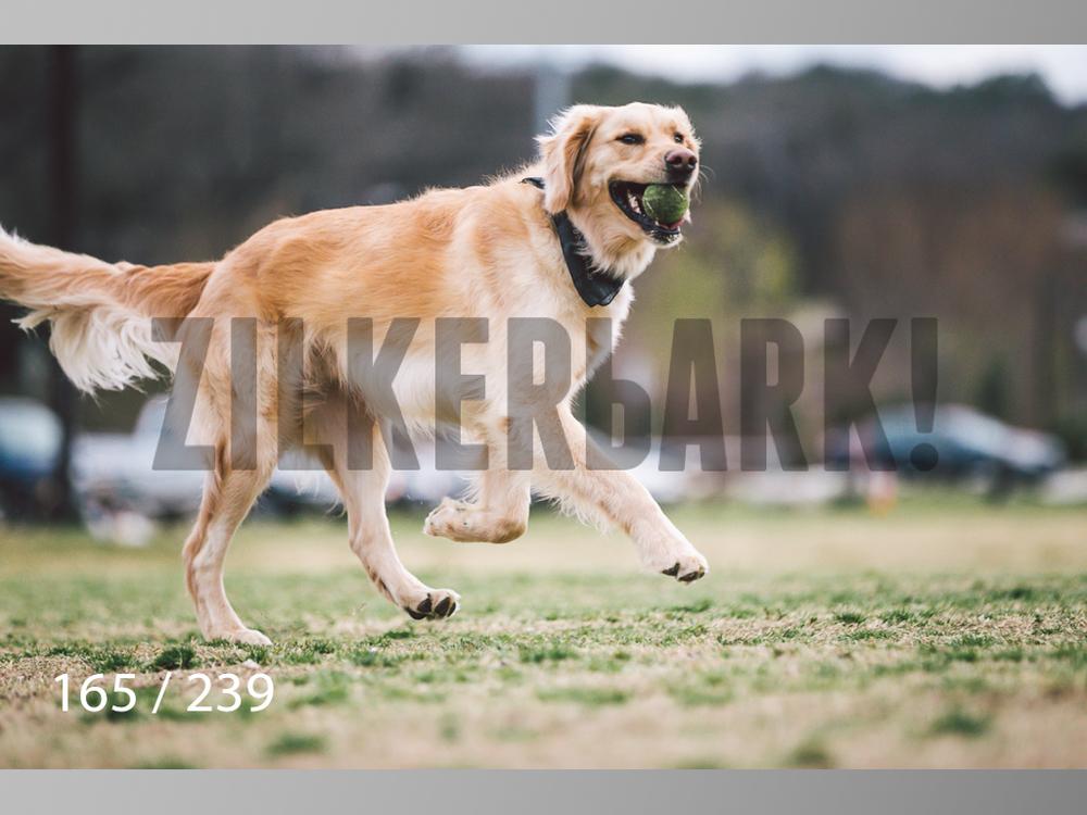 2.20 Dogs-165.jpg