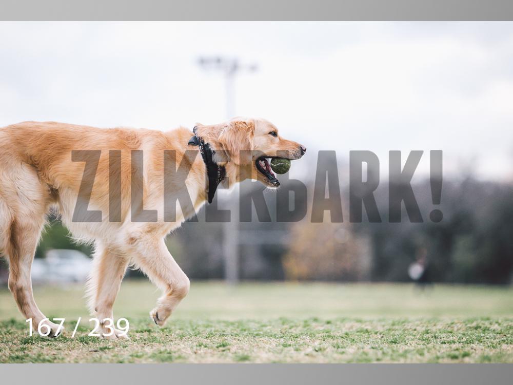 2.20 Dogs-167.jpg