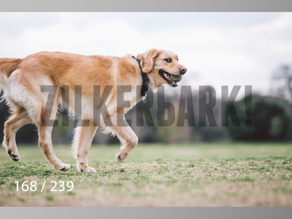2.20 Dogs-168.jpg