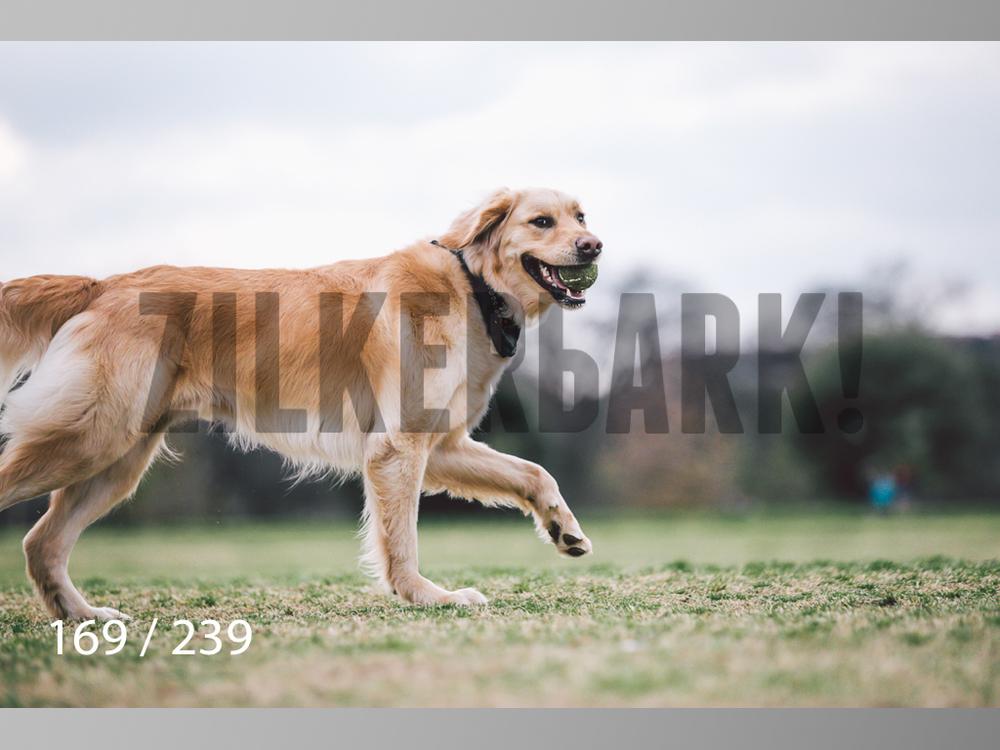 2.20 Dogs-169.jpg