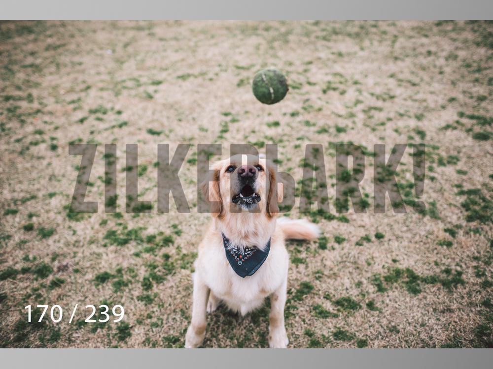 2.20 Dogs-170.jpg