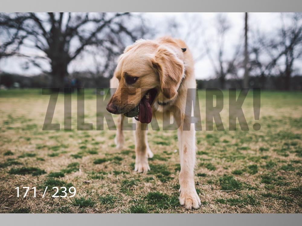 2.20 Dogs-171.jpg