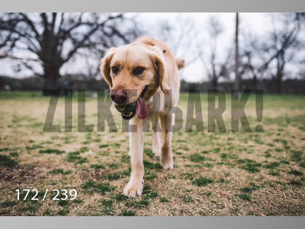 2.20 Dogs-172.jpg