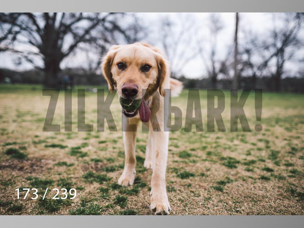 2.20 Dogs-173.jpg