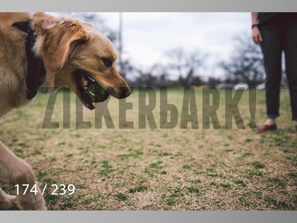 2.20 Dogs-174.jpg