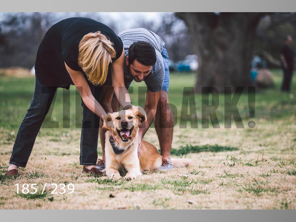 2.20 Dogs-185.jpg