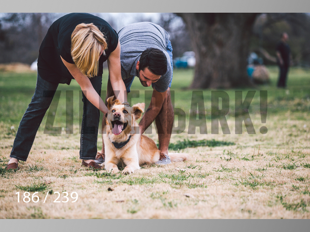 2.20 Dogs-186.jpg