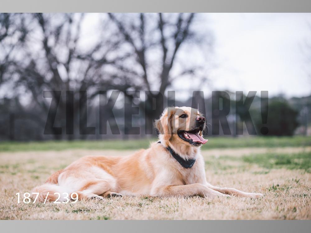 2.20 Dogs-187.jpg