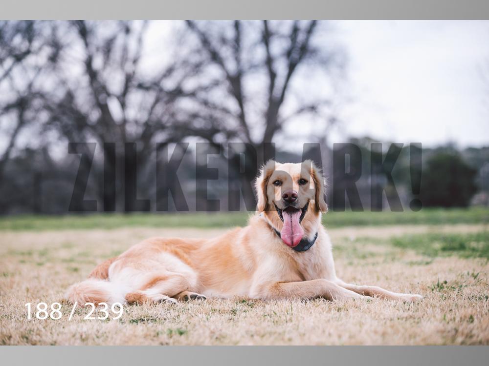 2.20 Dogs-188.jpg