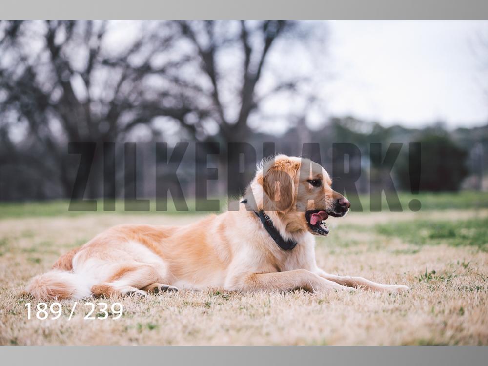 2.20 Dogs-189.jpg
