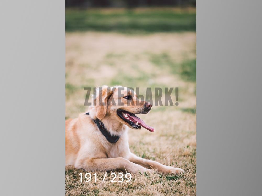 2.20 Dogs-191.jpg