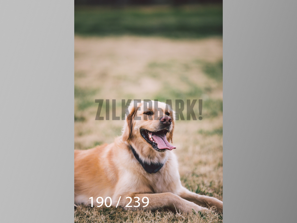 2.20 Dogs-190.jpg