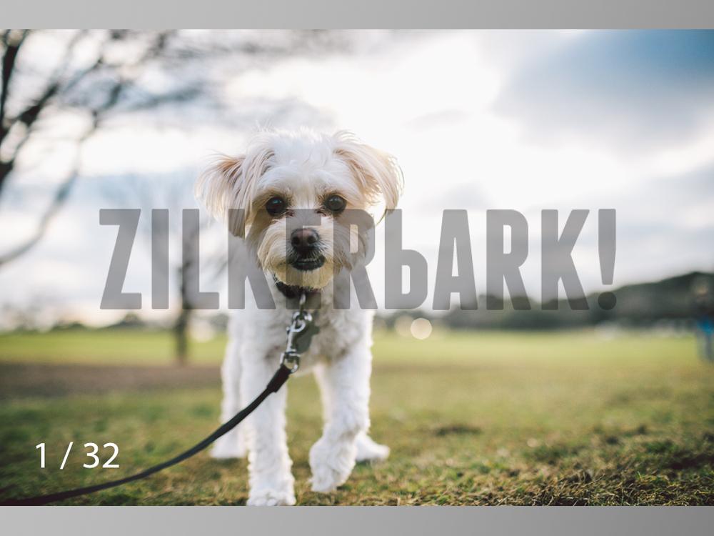2.22 dogs-01.jpg