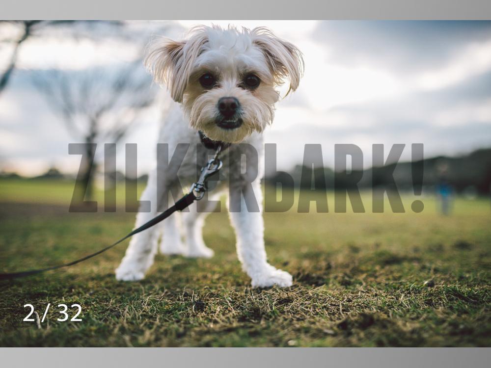 2.22 dogs-02.jpg