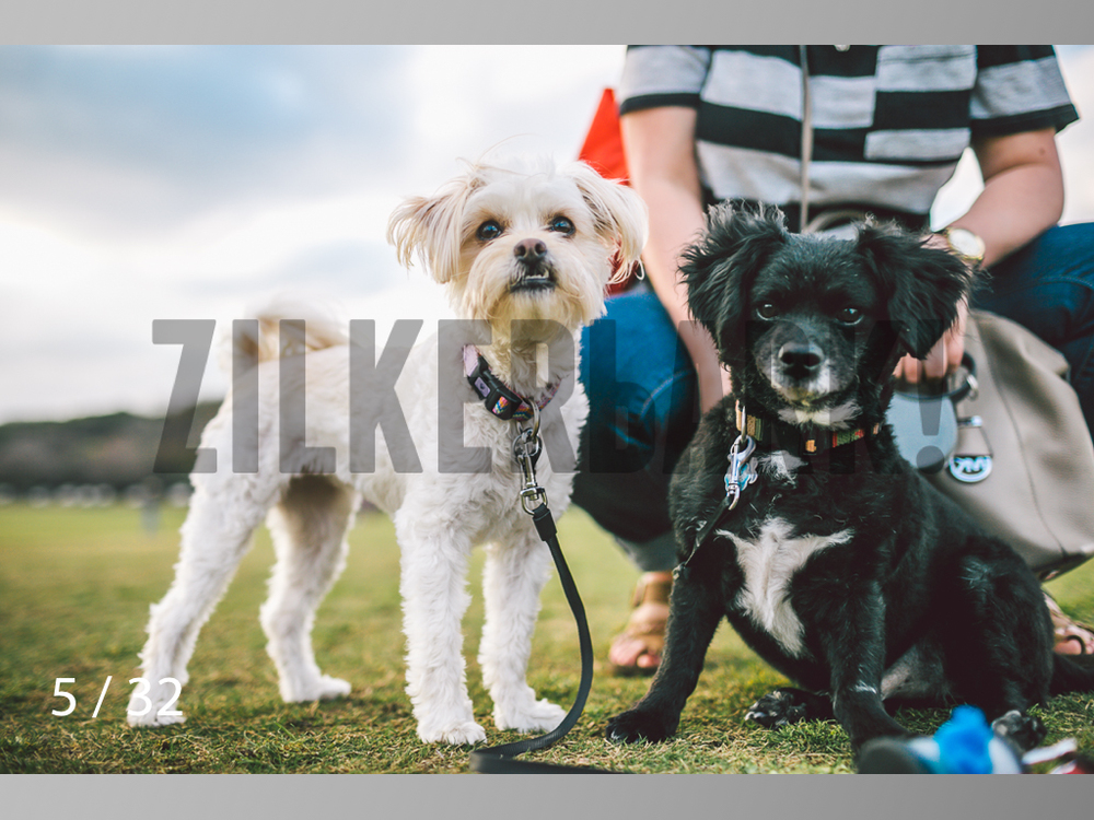 2.22 dogs-05.jpg