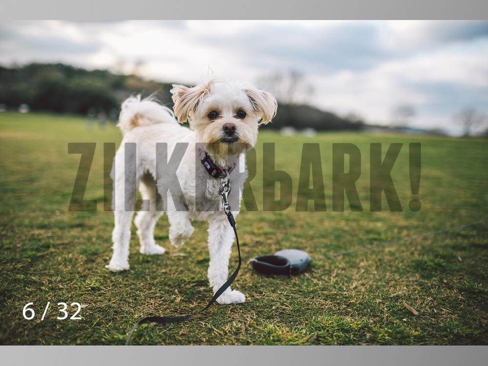 2.22 dogs-06.jpg