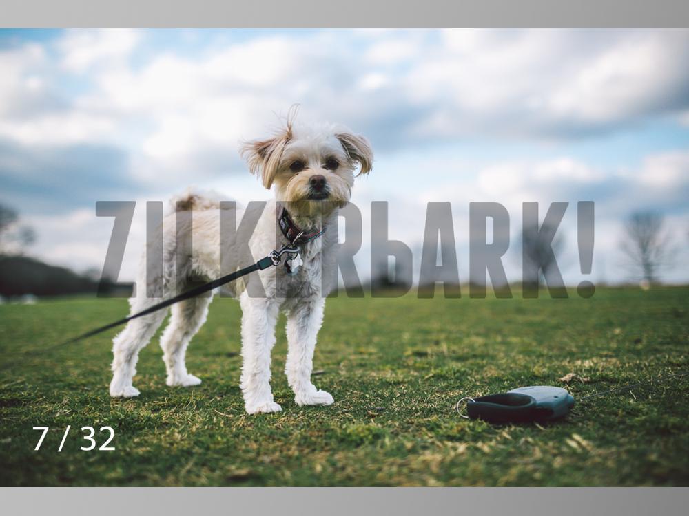 2.22 dogs-07.jpg