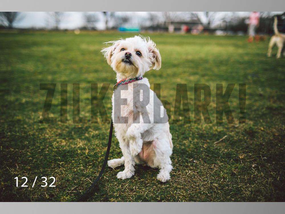2.22 dogs-12.jpg