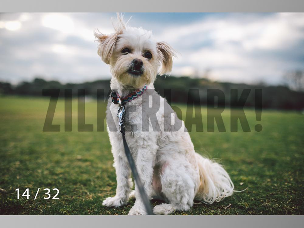 2.22 dogs-14.jpg
