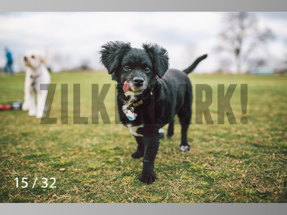 2.22 dogs-15.jpg