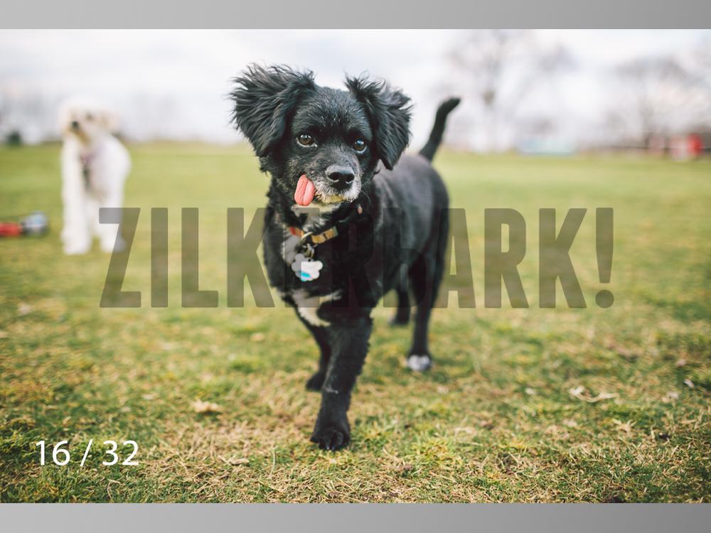 2.22 dogs-16.jpg