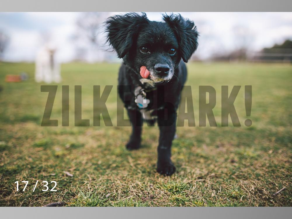2.22 dogs-17.jpg