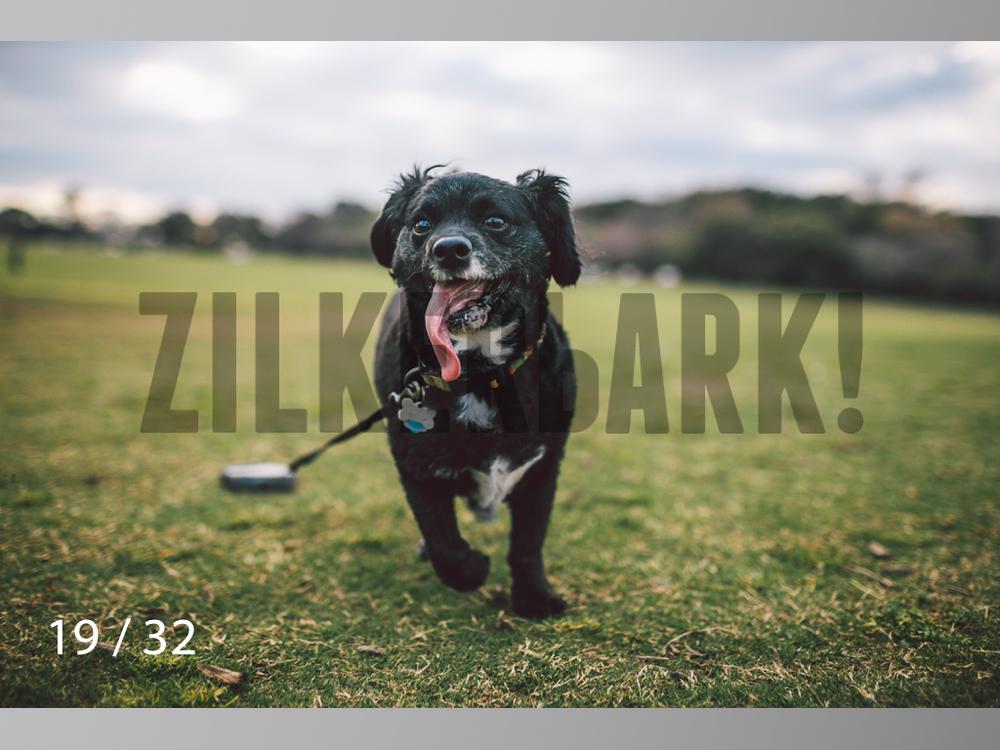 2.22 dogs-19.jpg