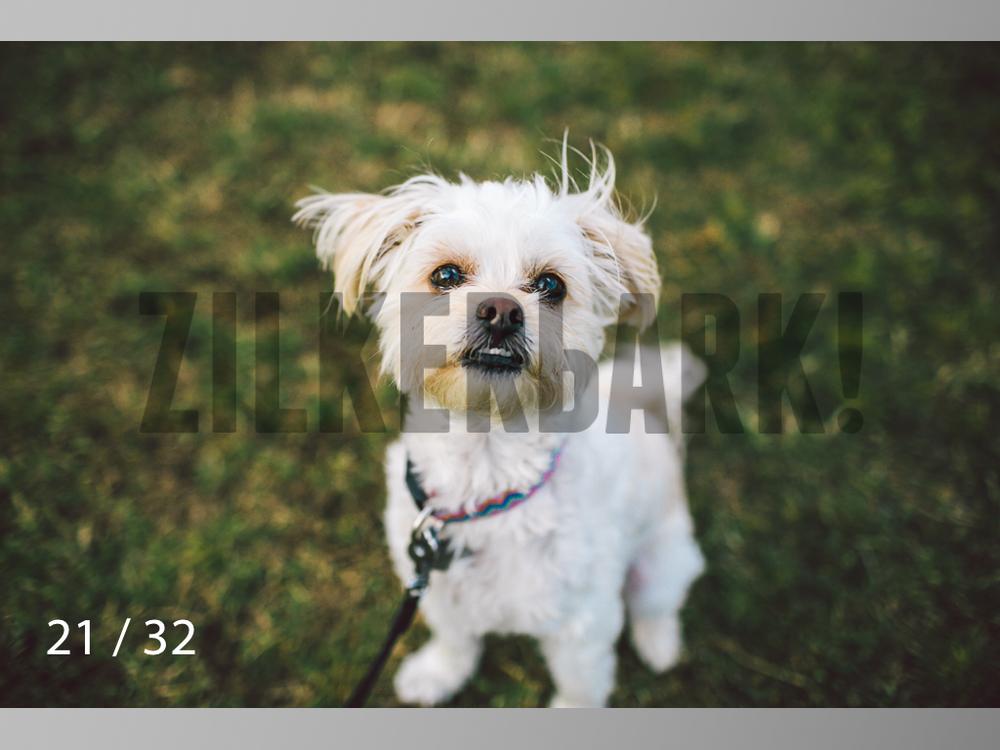 2.22 dogs-21.jpg