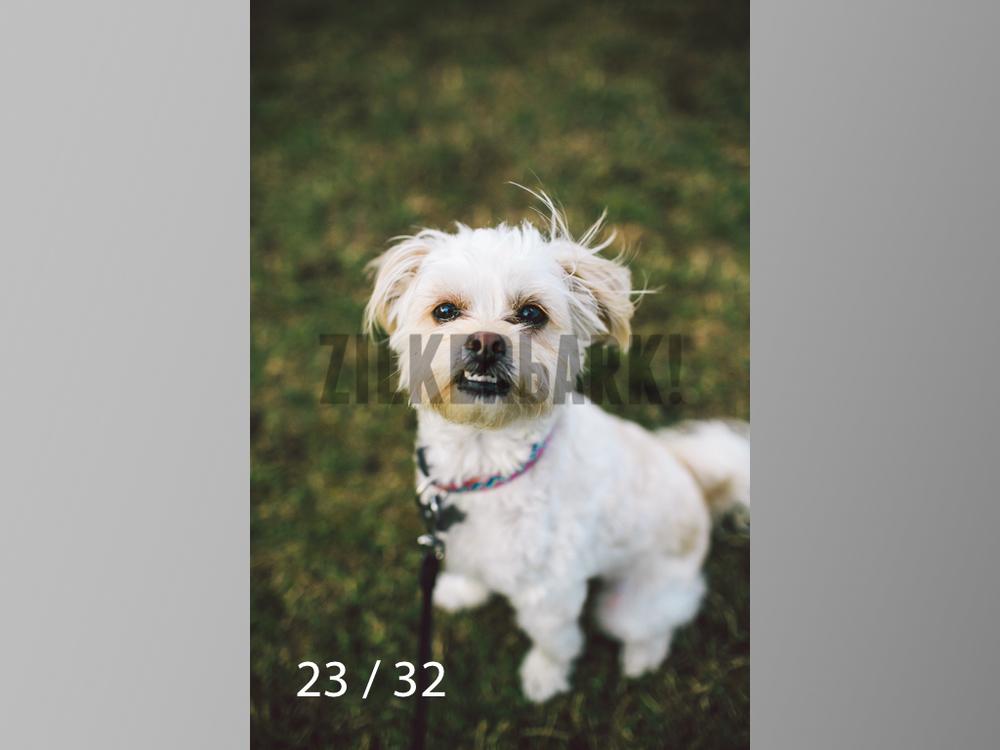 2.22 dogs-23.jpg