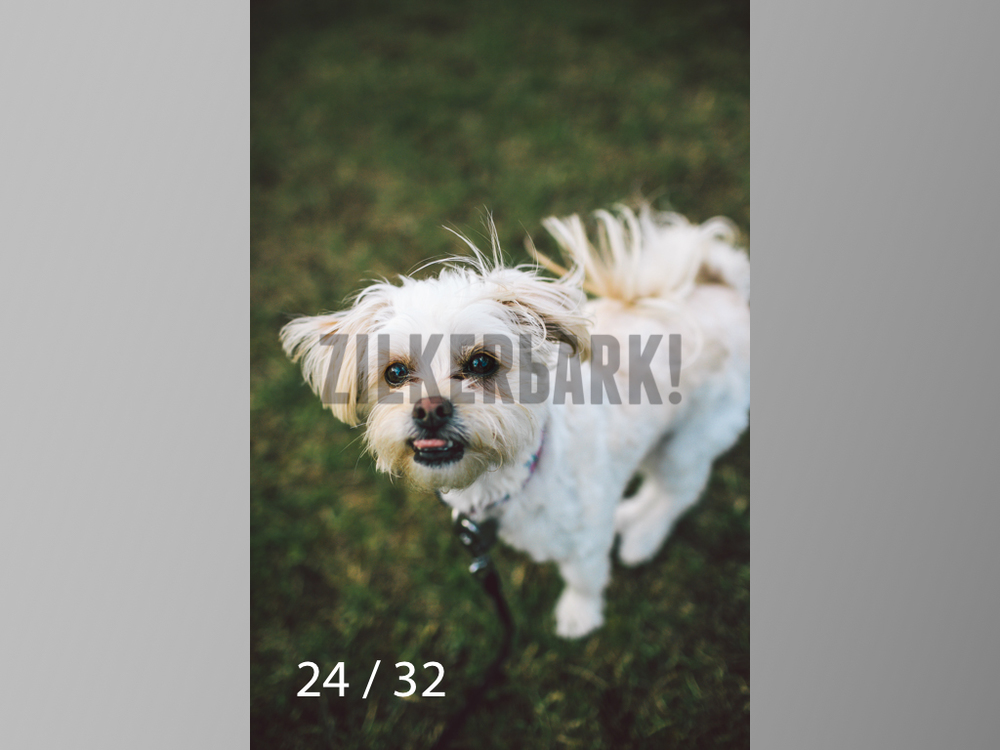 2.22 dogs-24.jpg