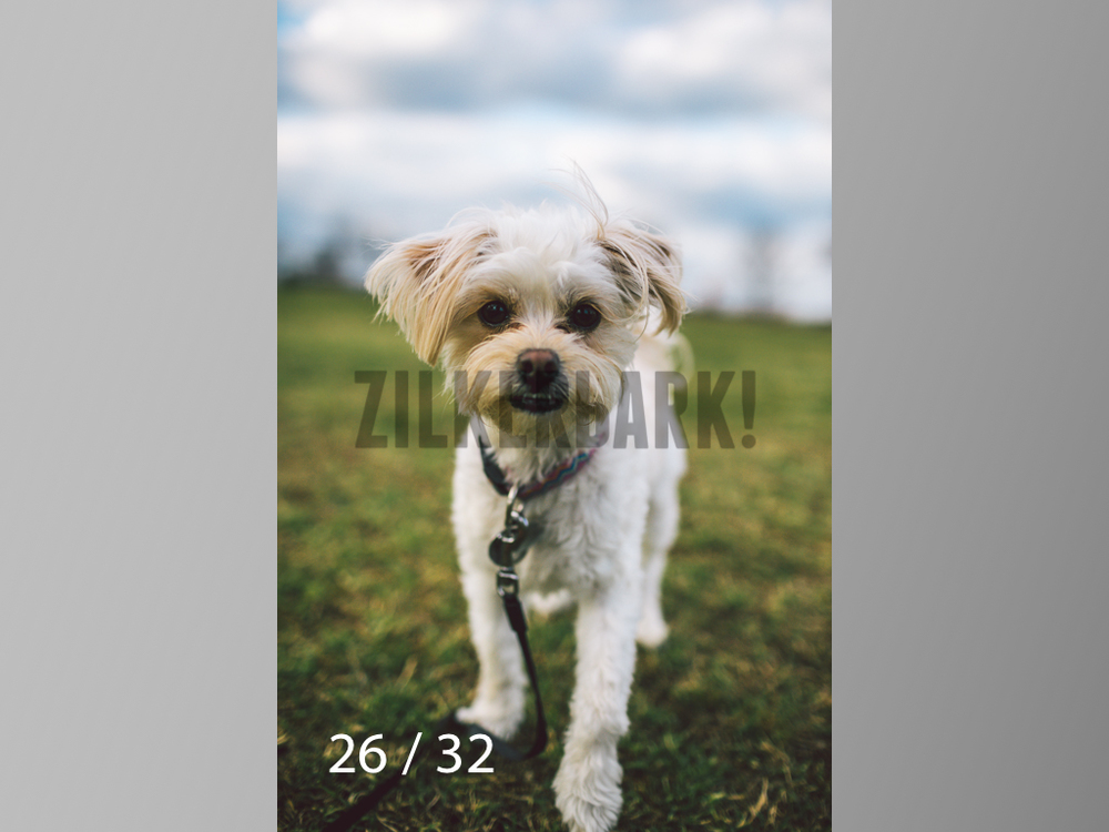 2.22 dogs-26.jpg