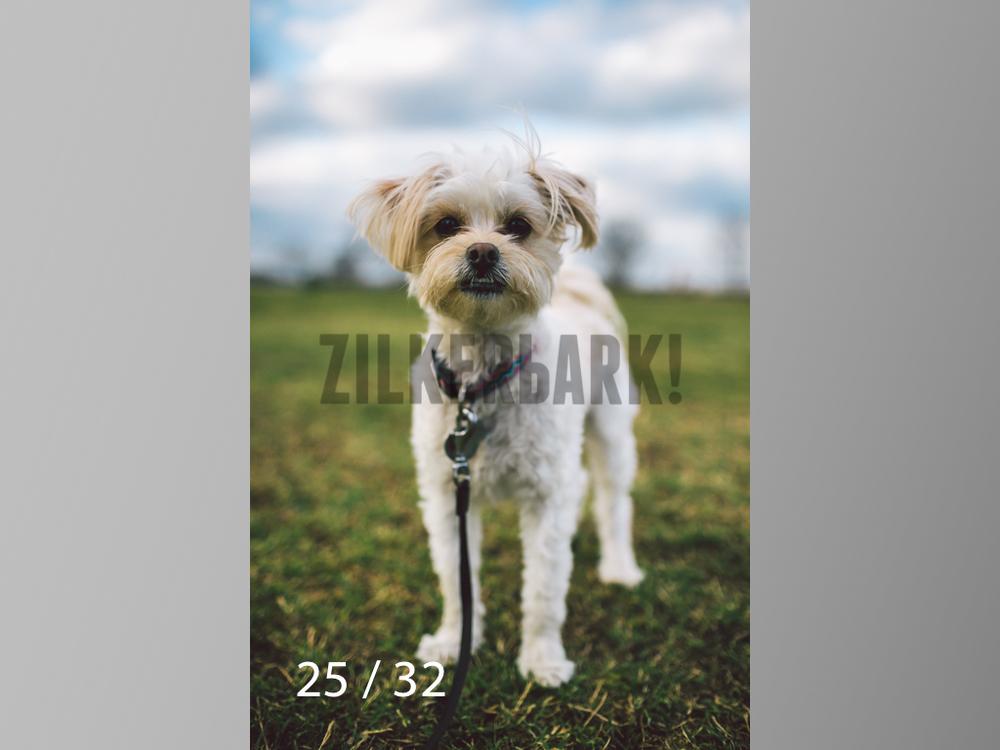 2.22 dogs-25.jpg