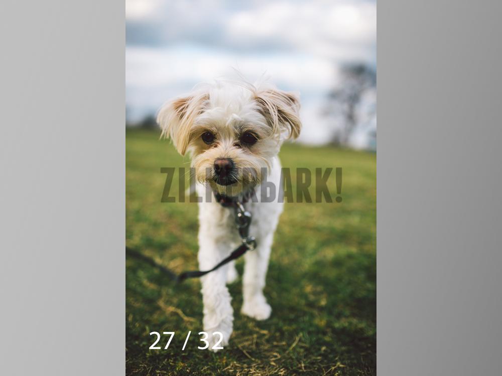 2.22 dogs-27.jpg