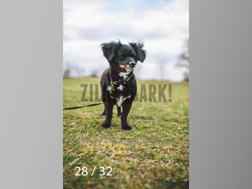 2.22 dogs-28.jpg