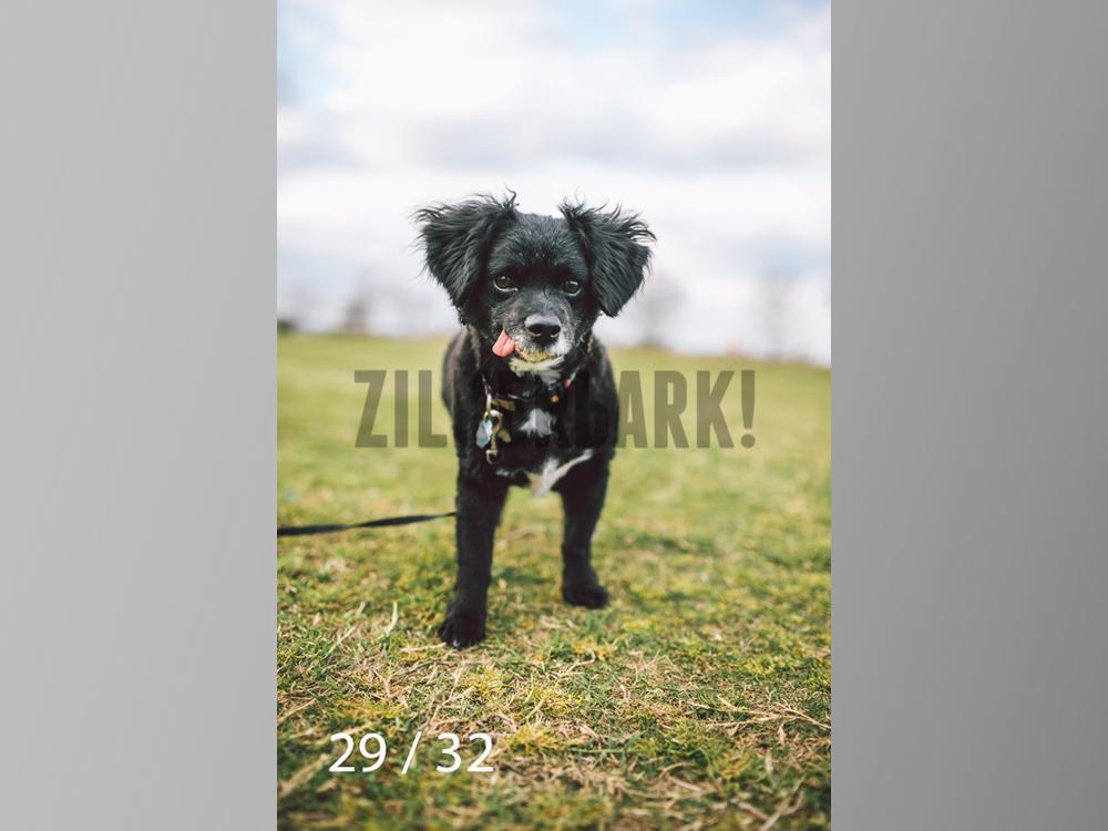 2.22 dogs-29.jpg