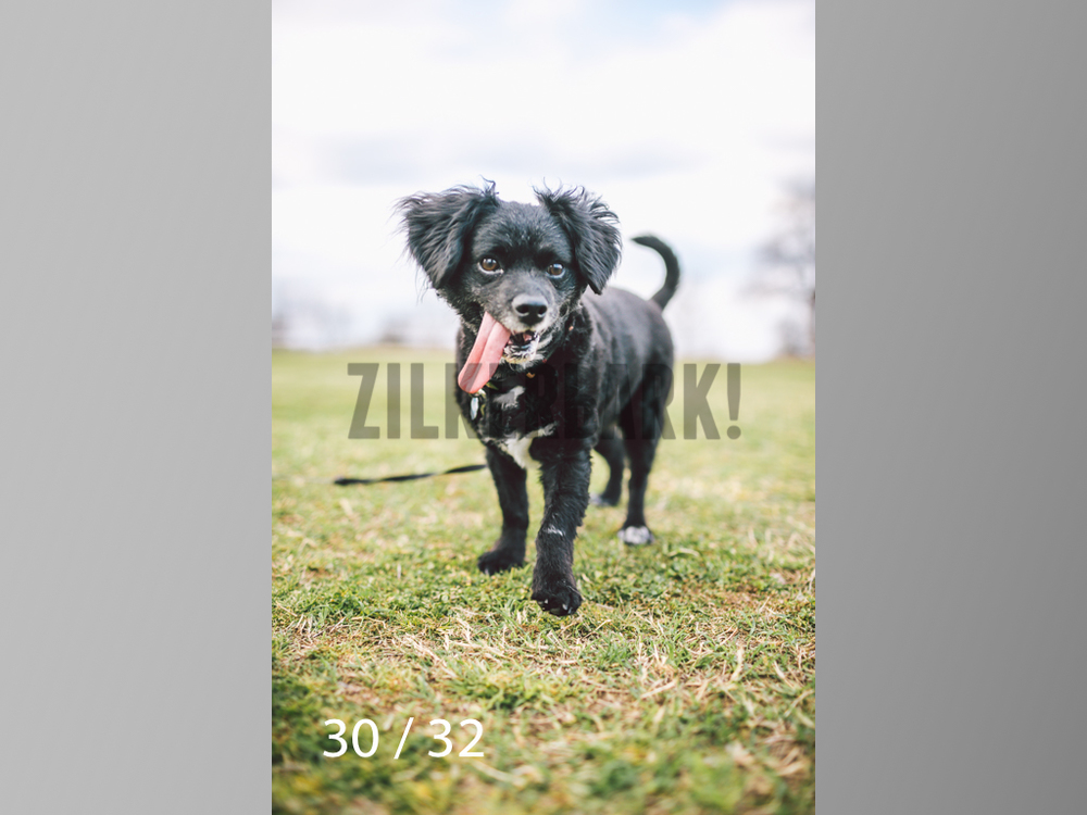 2.22 dogs-30.jpg