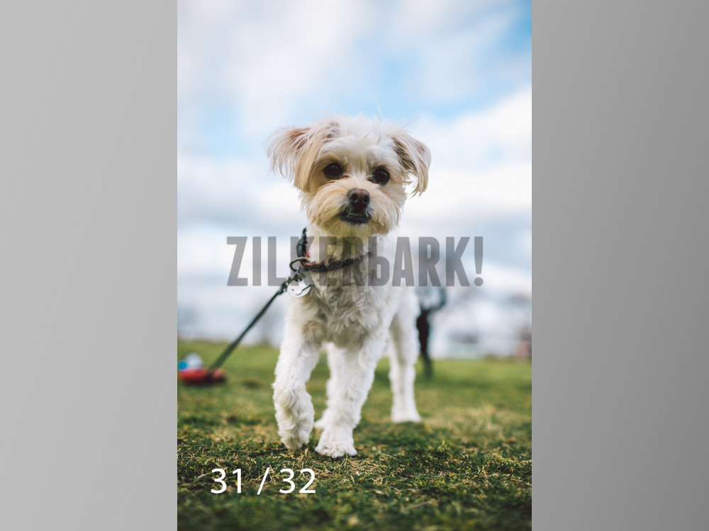 2.22 dogs-31.jpg