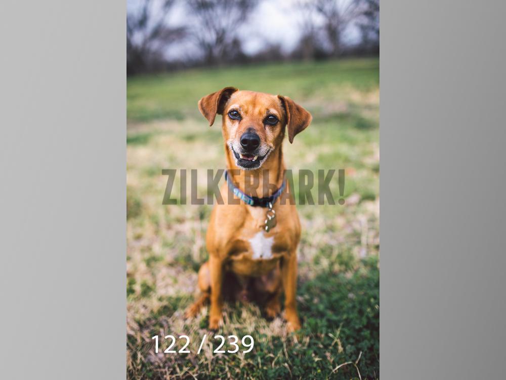 2.20 Dogs-122.jpg
