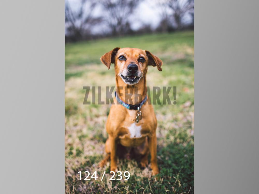 2.20 Dogs-124.jpg