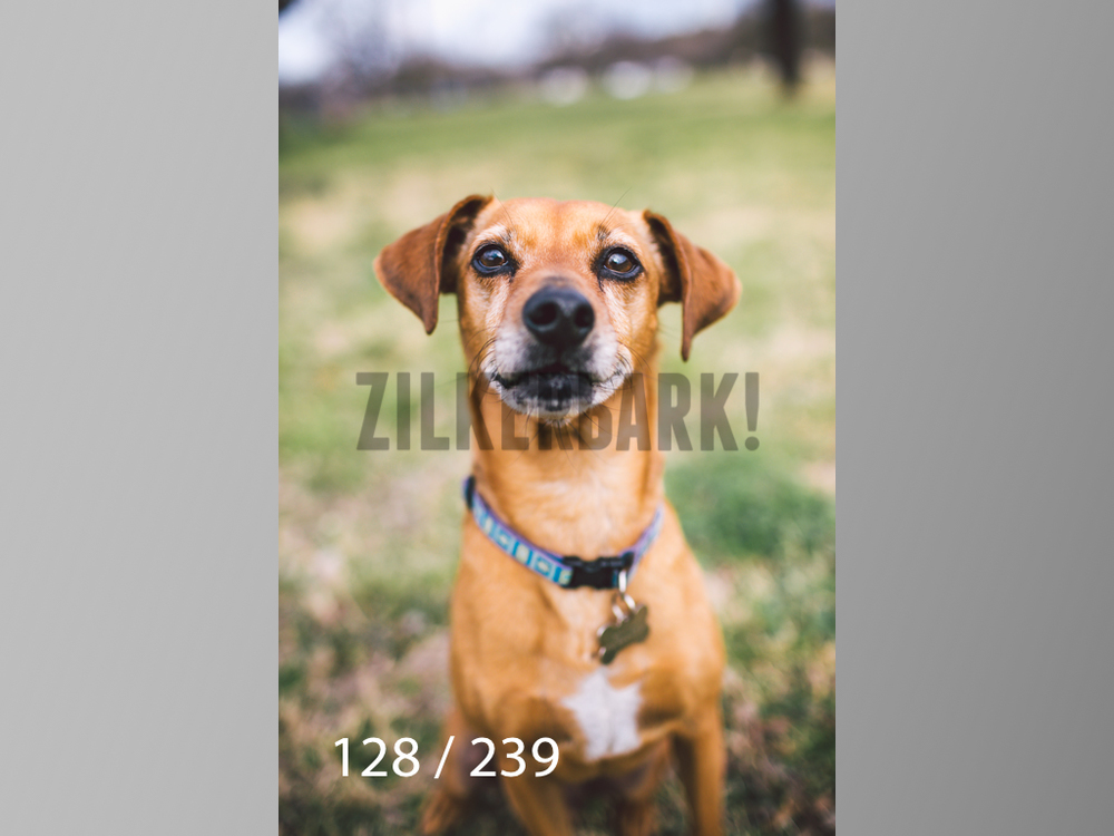 2.20 Dogs-128.jpg
