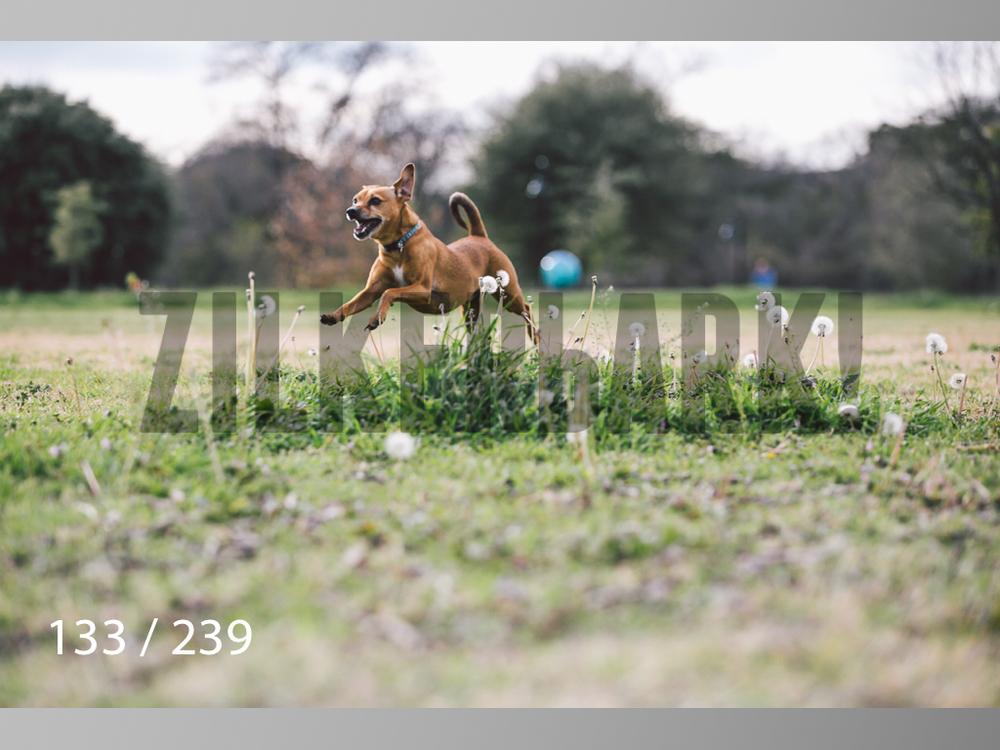 2.20 Dogs-133.jpg
