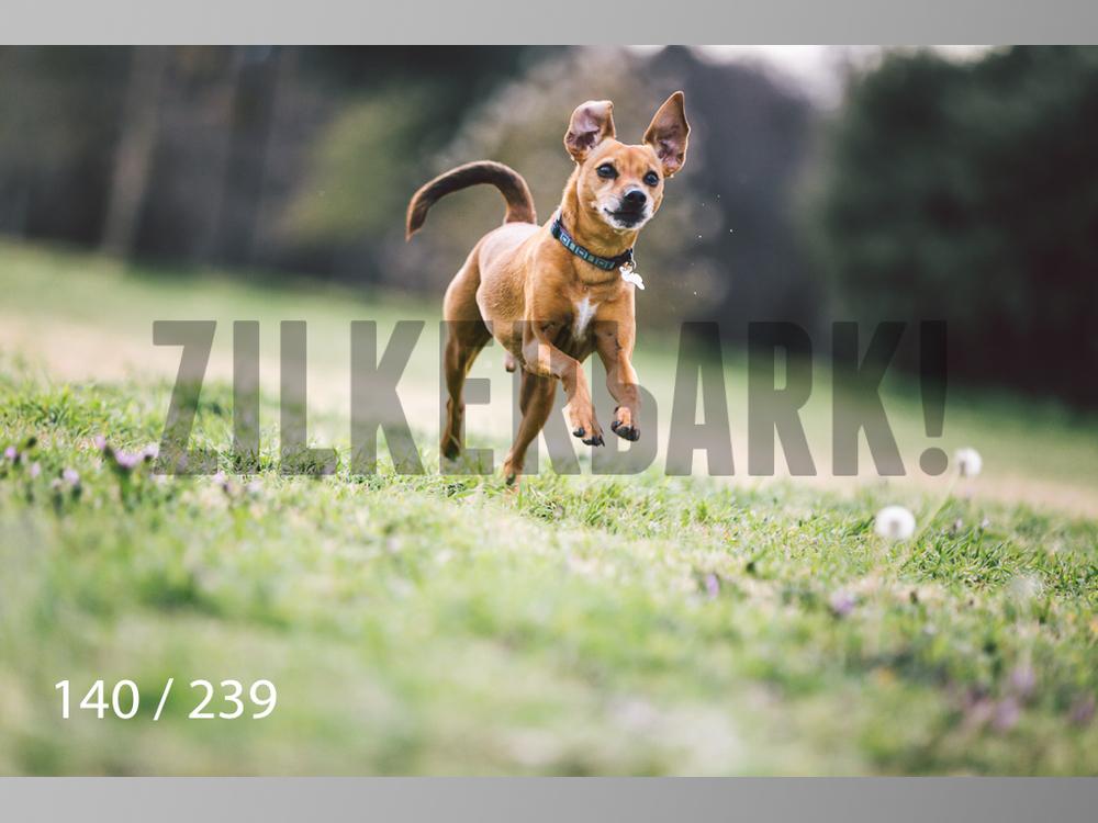 2.20 Dogs-140.jpg