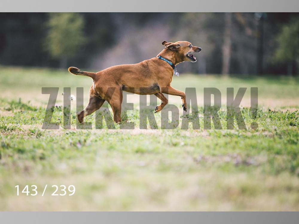 2.20 Dogs-143.jpg