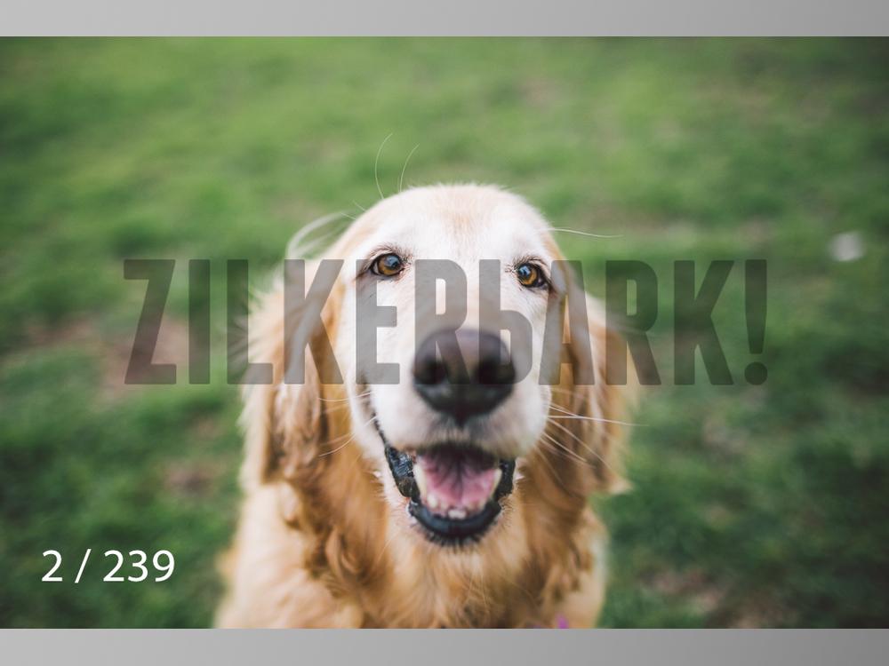 2.20 Dogs-002.jpg